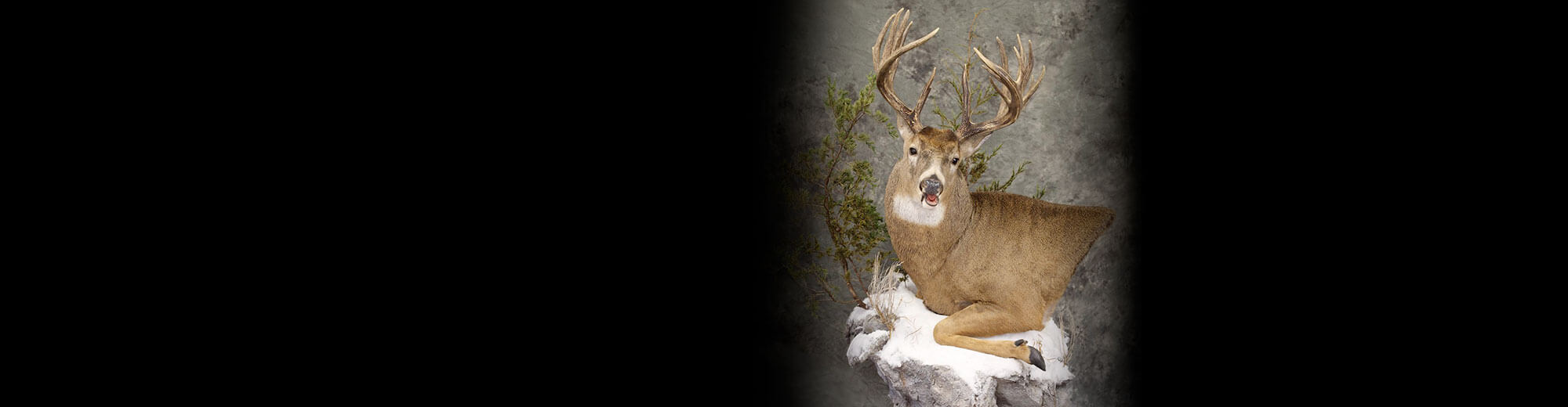 best in world whitetail mount 2019 Clint Rickey